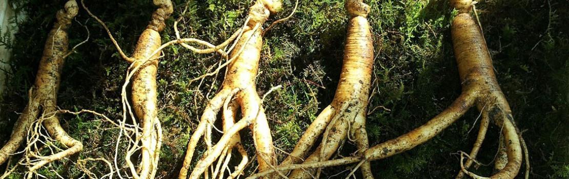 gyógynövények az erekció javítására