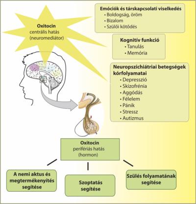 Pénisznagyobbító hormonok, Férfi intimplasztika