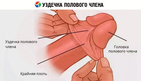 mit kell enni erekcióhoz hogyan lehet kezelni a gyors erekciót a férfiaknál