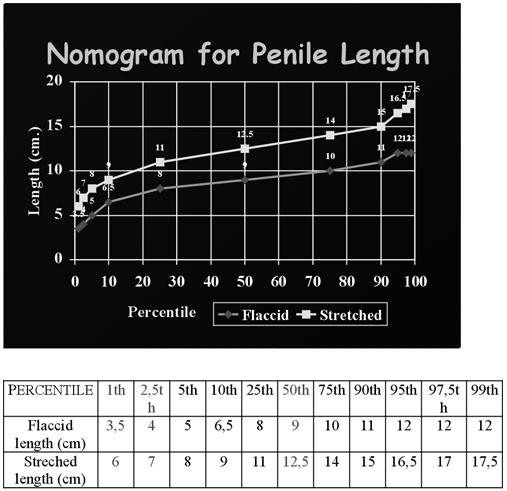 pénisz mérete az erekciótól kezdve gyenge merevedési okok