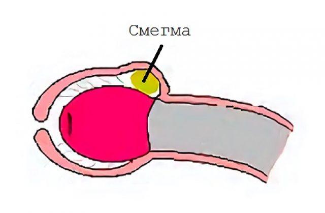 az erekció során időnként növekszik