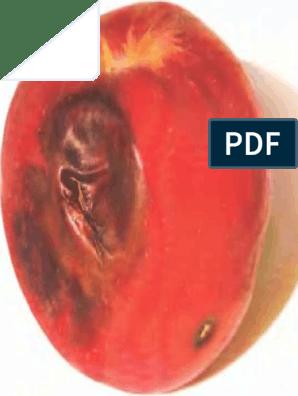 női erekciós fotók modell srác pénisz