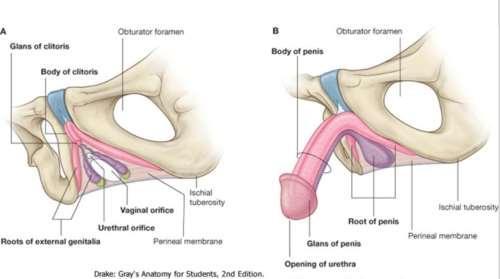pénisz női kezében